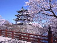 日本一の『弘前城公園桜まつり』