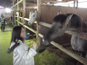 王子君はとても珍しい色で、表情もなんとなく今まで付き合った馬とどこが違う