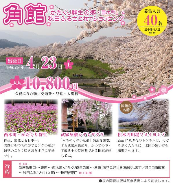 「かたくり群生の郷・西木町」と角館 秋田ふるさと村でショッピング